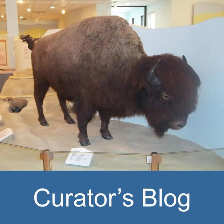 curators blog icon